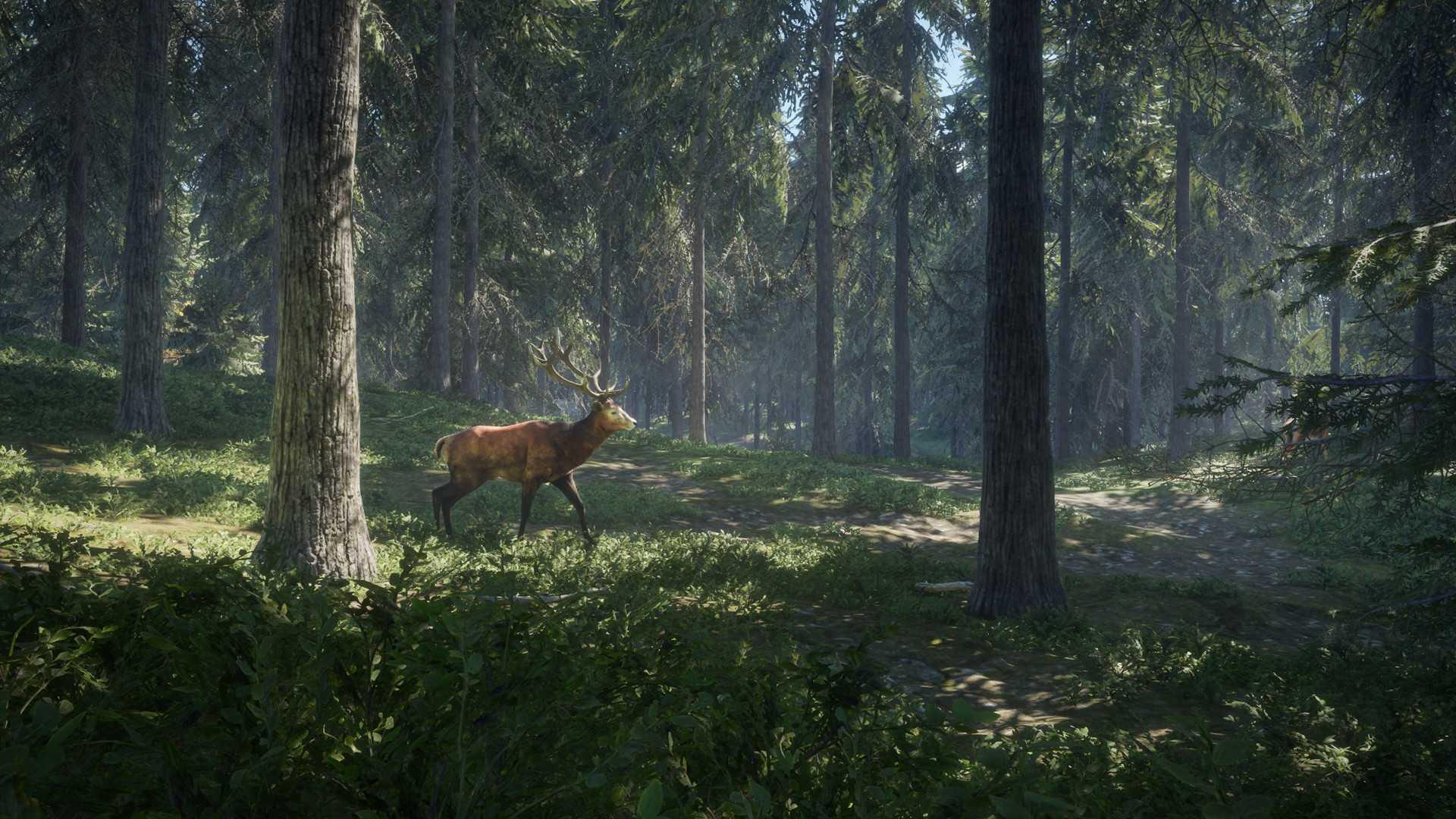 theHunter: Call of the Wild Sistem Gereksinimleri